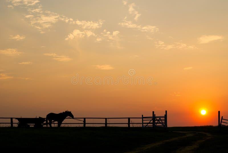 Pferd bei Sonnenuntergang lizenzfreie stockfotografie