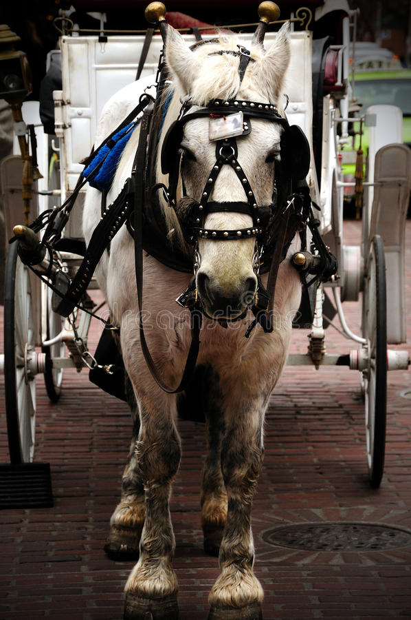 Pferd Chariot stockfotografie