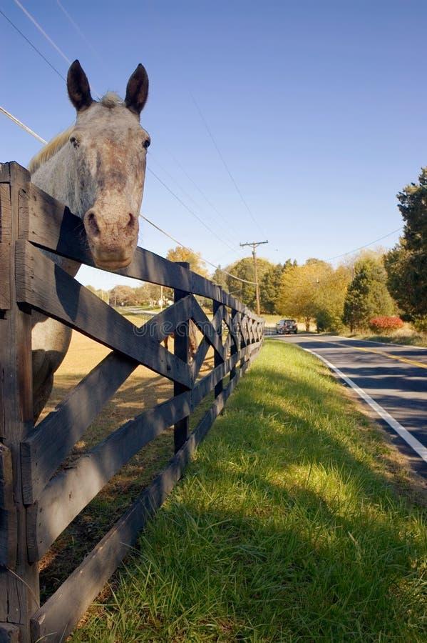 Pferd, das über Zaun blickt lizenzfreie stockfotos