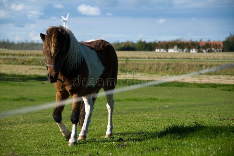 Pferd, das auf Feld trottet lizenzfreie stockbilder