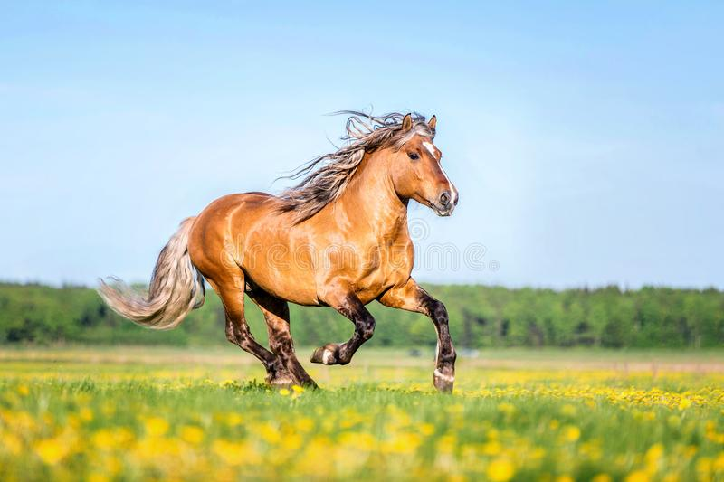 Pferd, das frei auf der Weide läuft stockfotos