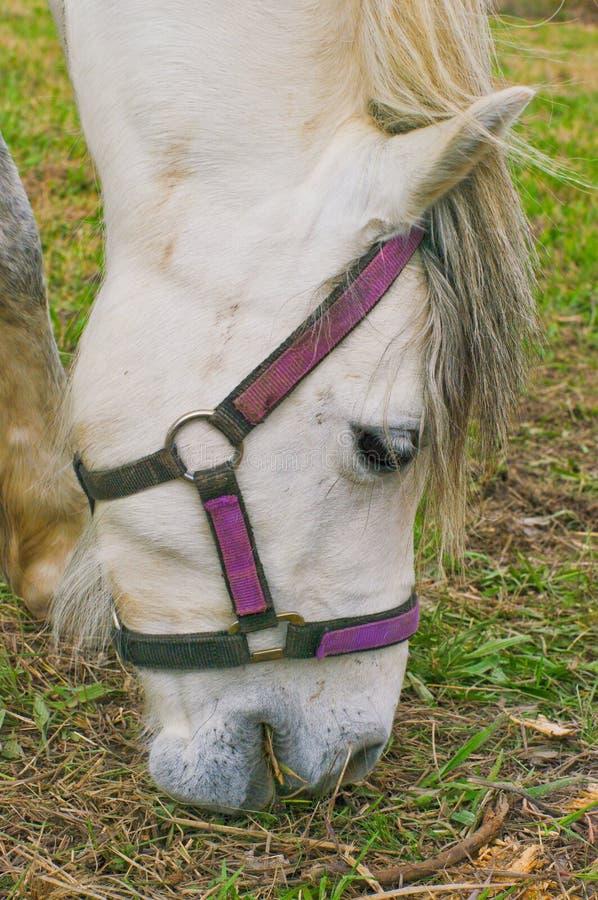 Pferd, das Gras isst lizenzfreies stockbild