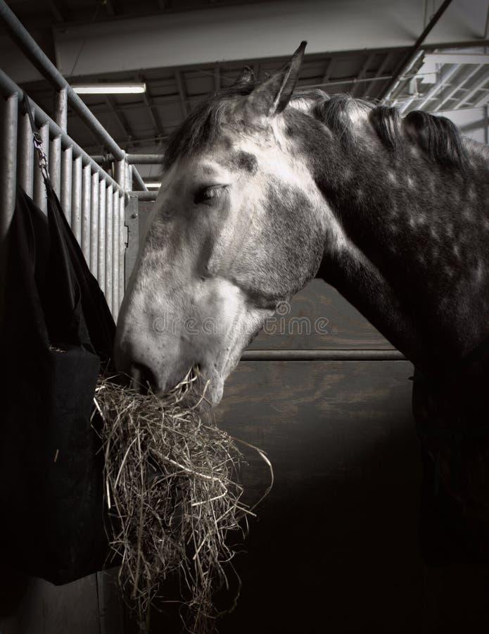 Pferd, das Heu isst lizenzfreie stockfotografie