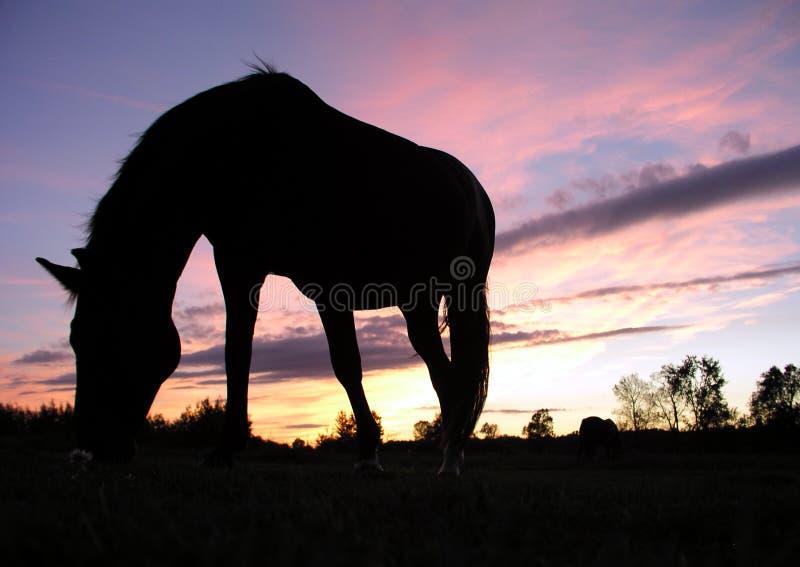Pferd, das am Sonnenuntergang (Schattenbild, weiden lässt) stockbild