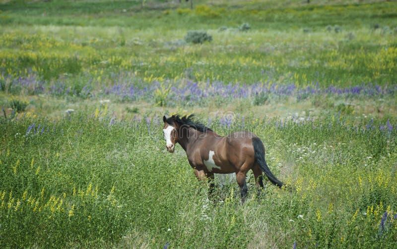Pferd in den Wildflowers lizenzfreies stockfoto
