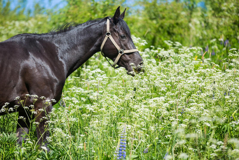 Pferd in den Wildflowers stockbild