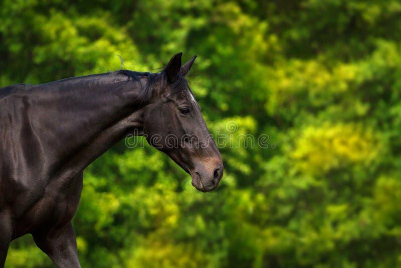 Pferd in der Bewegung lizenzfreies stockbild
