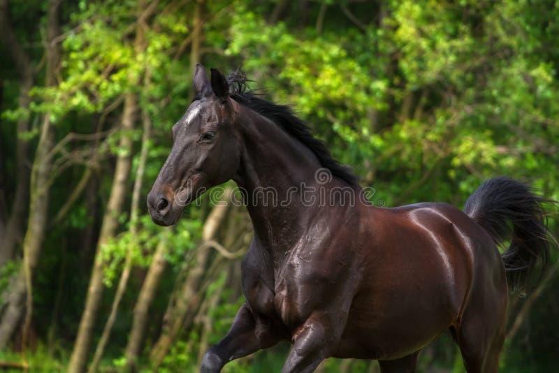 Pferd in der Bewegung stockfotos