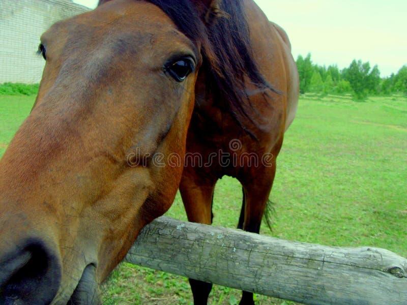 Pferd in der Koppel Pferd auf dem Bauernhof stockfotos