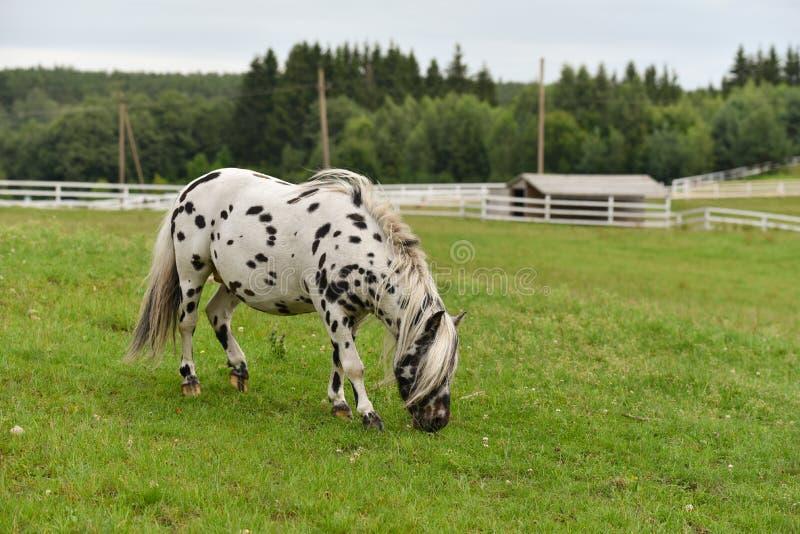 Pferd in der Ranch lizenzfreie stockbilder