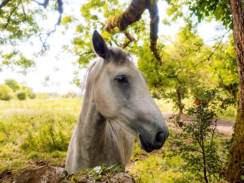 Pferd durch einen Steinzaun, heller warmer sonnenbeschiener Hintergrund Warme Sommert?ne lizenzfreies stockfoto