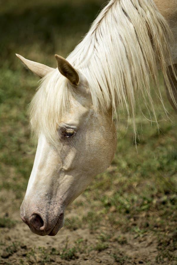 Pferd in einer Weide stockfotos
