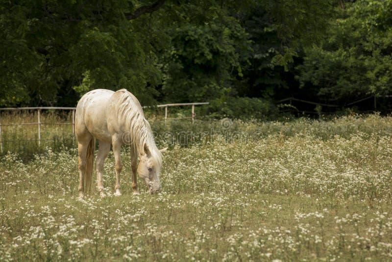 Pferd in einer Weide von Wildflowers stockbilder
