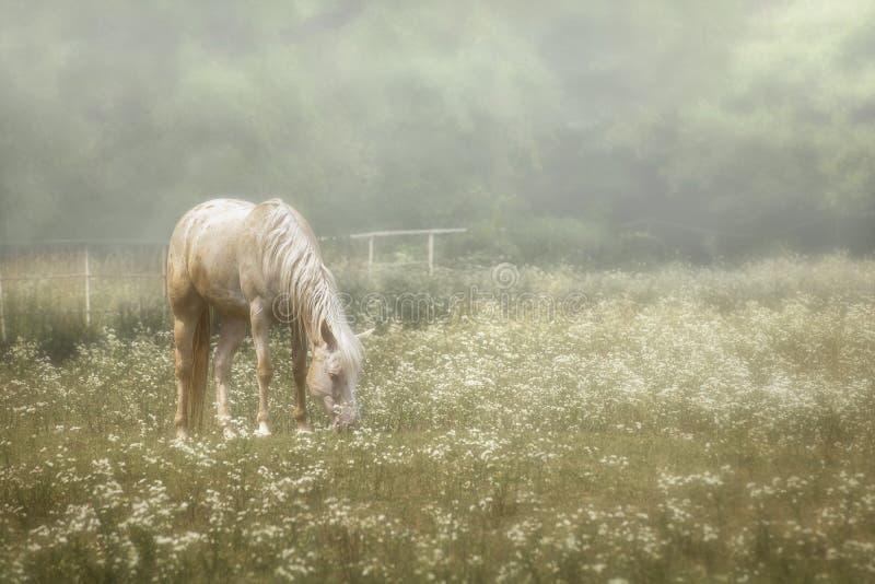 Pferd in einer Weide von Wildflowers stockfotos