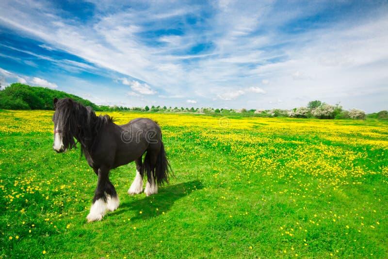 Pferd in einer Wiese stockfotos