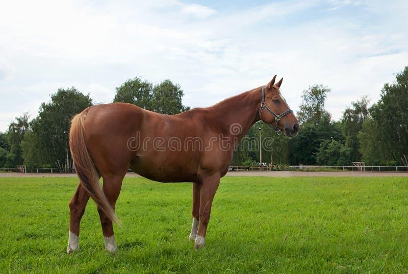 Pferd, Feld und Himmel stockfotos