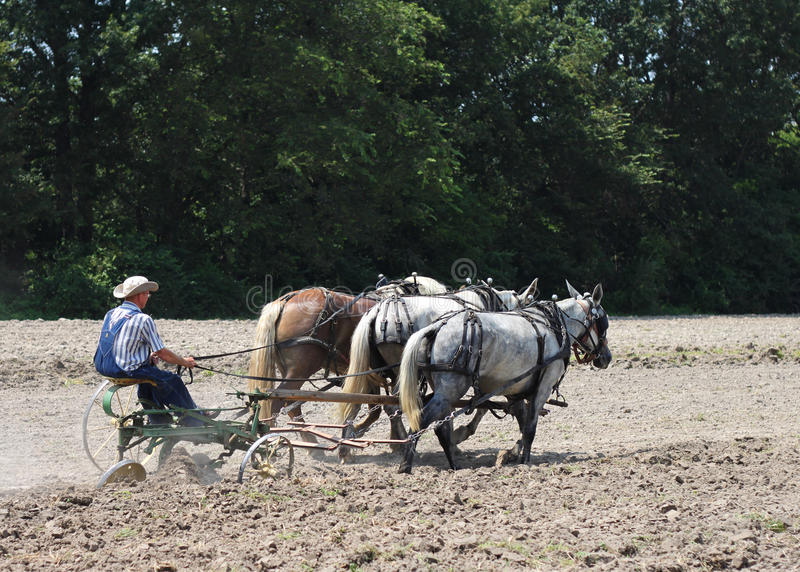Pferd gezeichneter Pflug und Landwirt stockfotografie