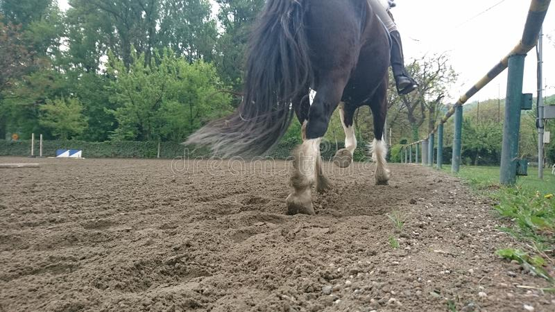 Pferd im Galopp stockfoto
