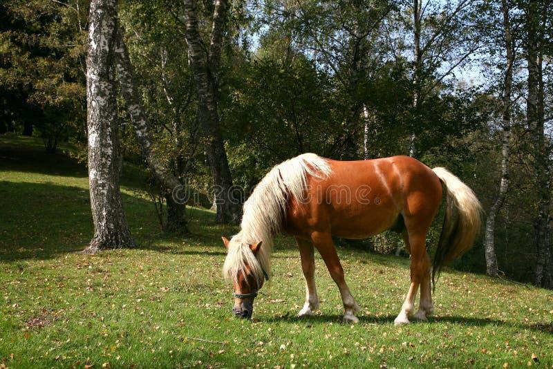 Pferd im Herbst stockfoto