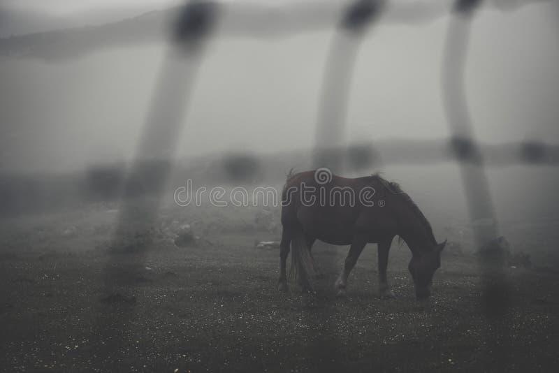 Pferd im Nebel in einem Bauernhof stockbilder