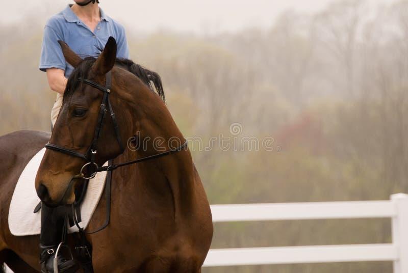 Pferd im Regen lizenzfreie stockbilder