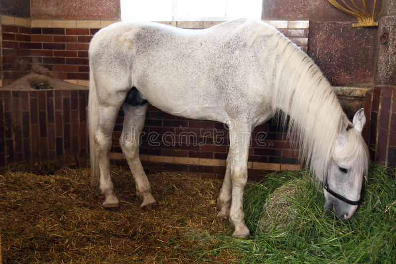 Pferd im Stall lizenzfreies stockfoto