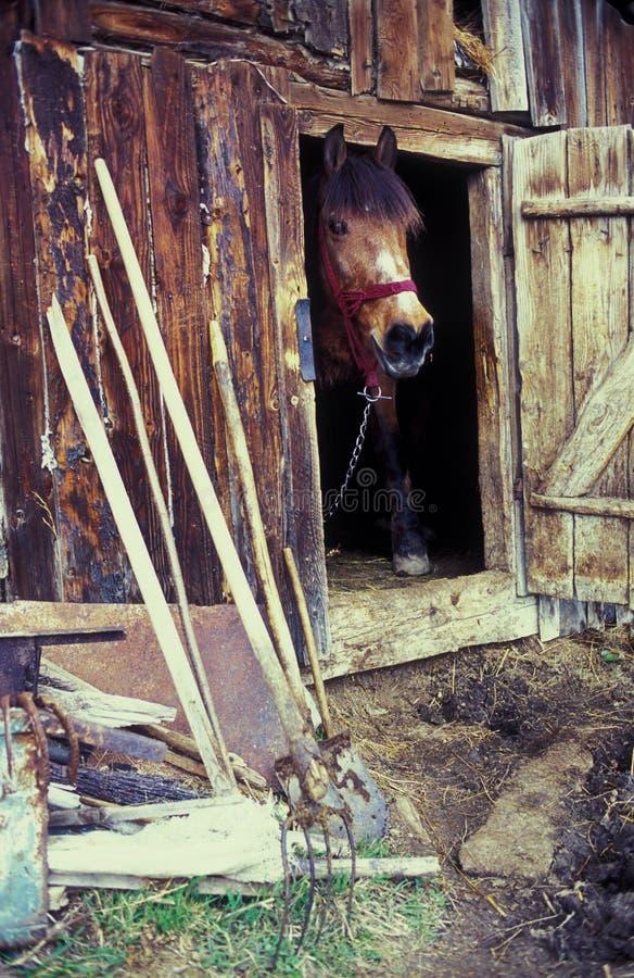 Download Pferd im Stall stockbild. Bild von kopf, tier, holz, kette - 21753849