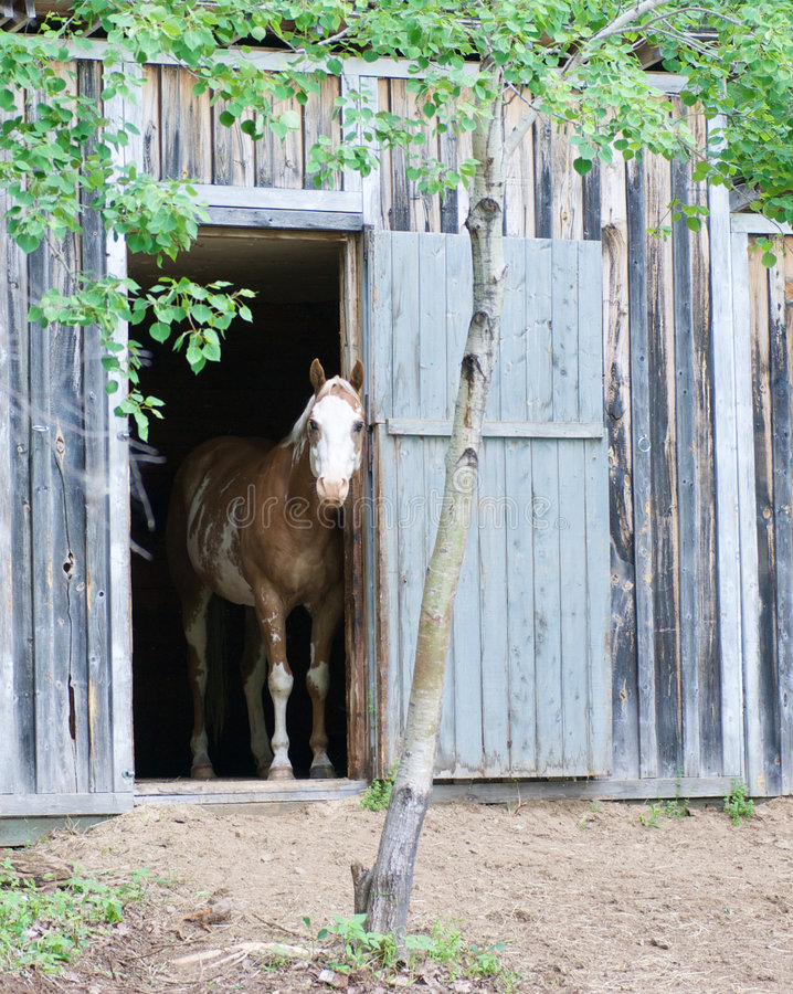 Pferd im Stall lizenzfreie stockfotos