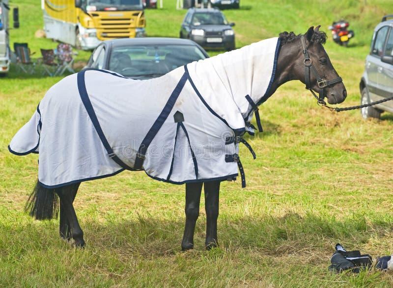 Pferd mit einer Jacke. lizenzfreies stockfoto