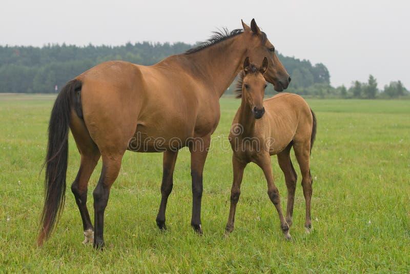 Pferd mit ihrem Fohlen lizenzfreie stockbilder