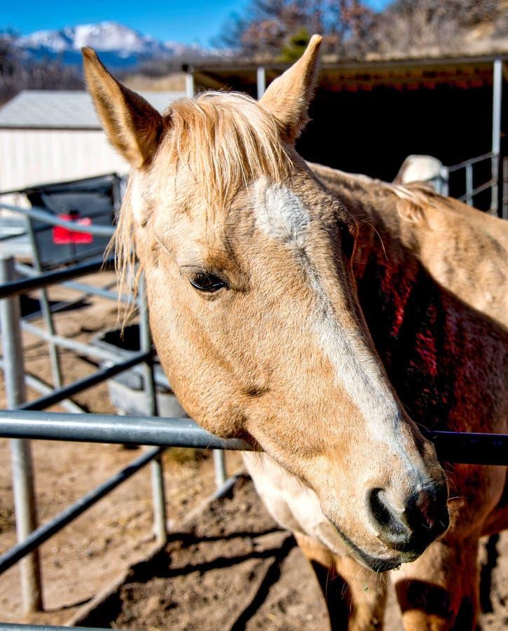 Pferd mit Spiess-Höchstberg stockfotos