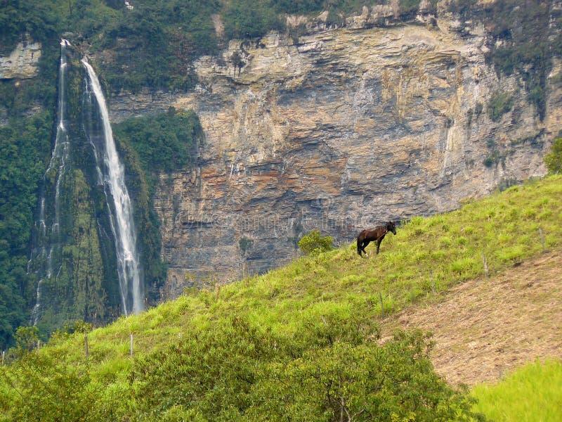 Pferd mit Wasserfall auf Hintergrund stockfoto