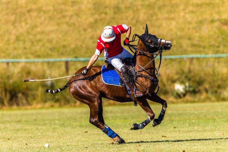 Pferd Polo Player Field Game Action stockfotos