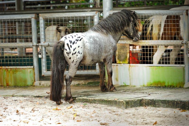 Pferd (Pony) in Singapur-Zoo lizenzfreies stockfoto