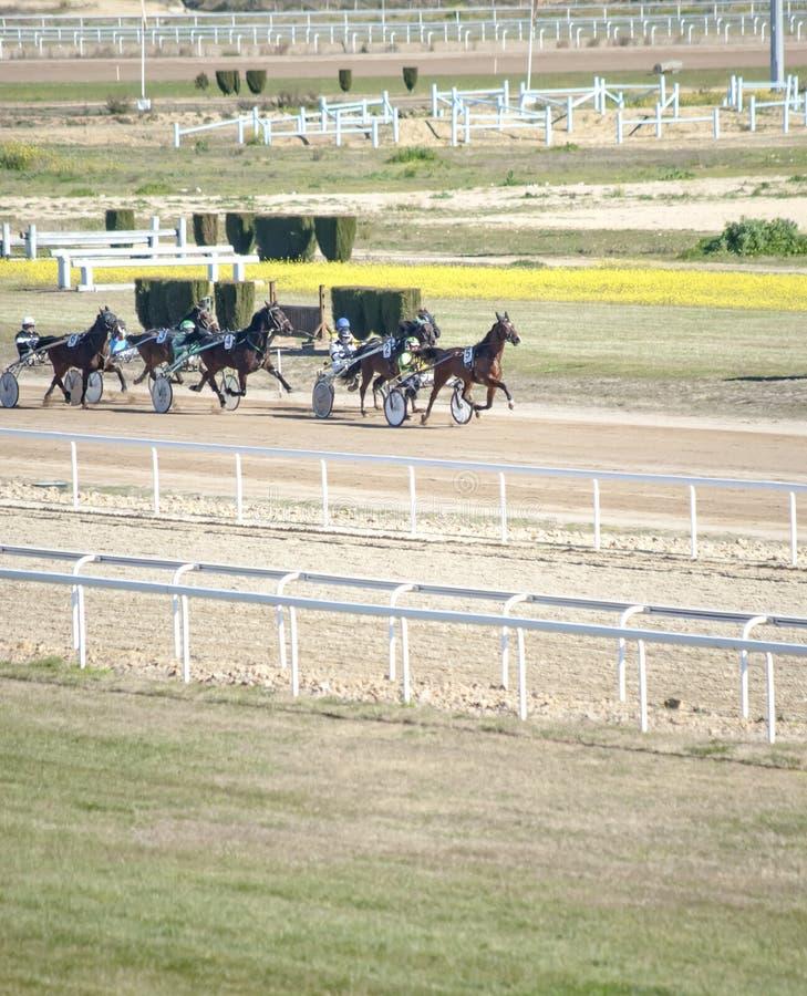 Pferd Racing stockfotografie