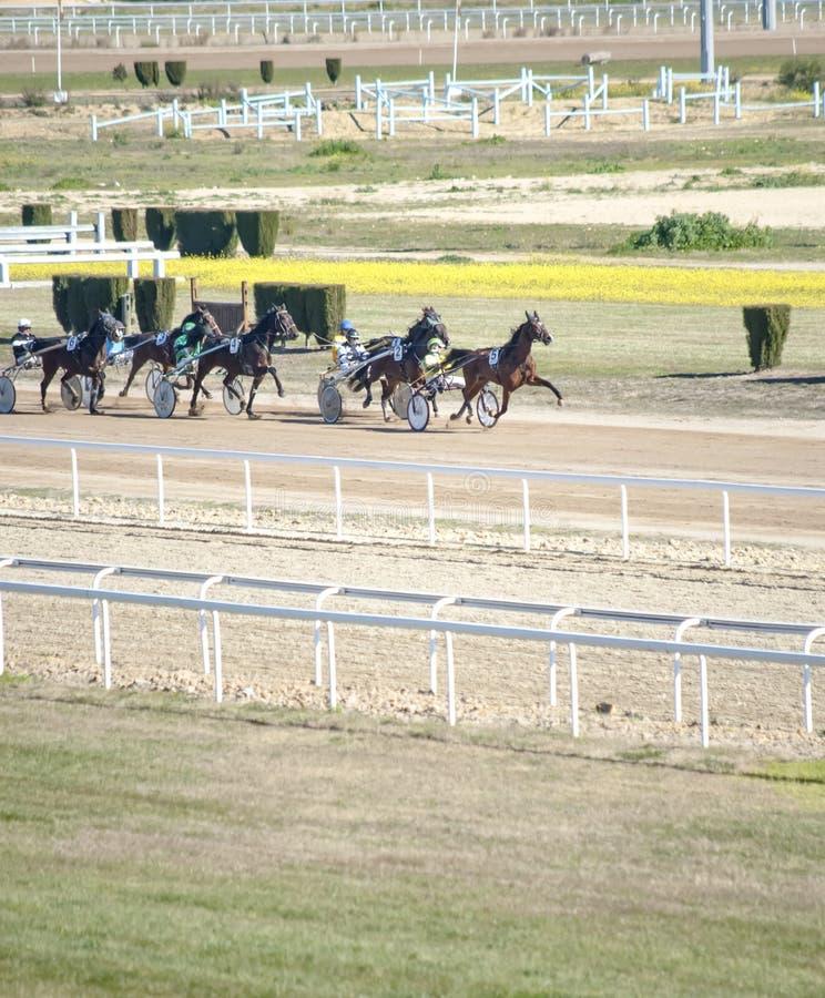 Pferd Racing stockbilder
