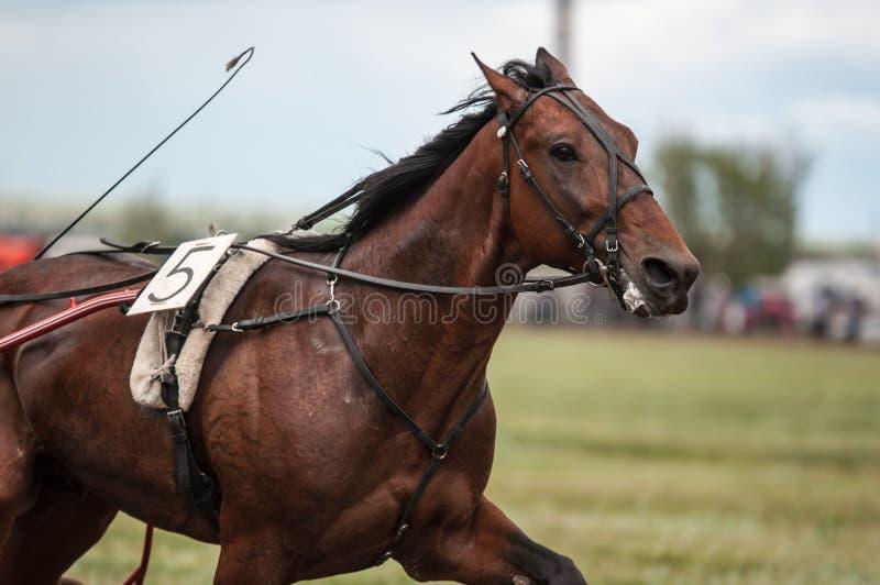 Pferd Racing lizenzfreie stockfotografie