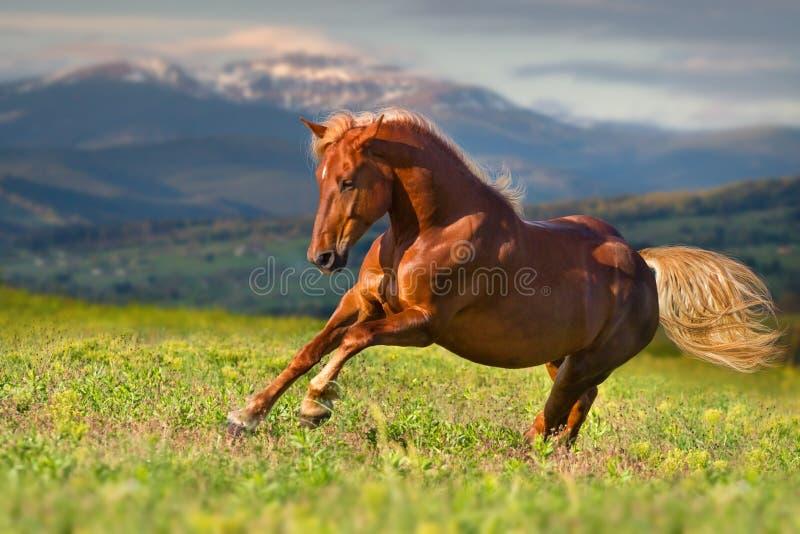 Pferd schnell laufen gelassen stockbild
