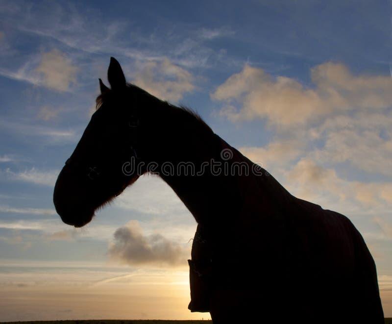 Download Pferd am Sonnenuntergang stockfoto. Bild von nord, schattenbild - 12201894