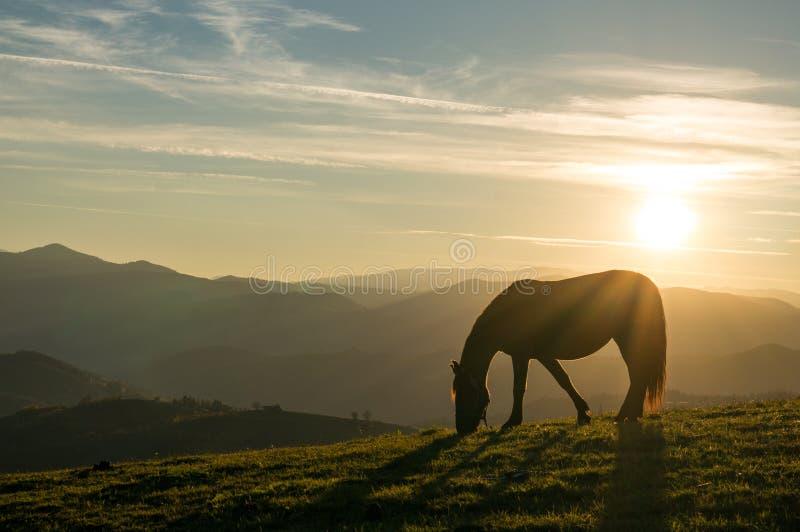 Pferd am Sonnenuntergang lizenzfreies stockbild