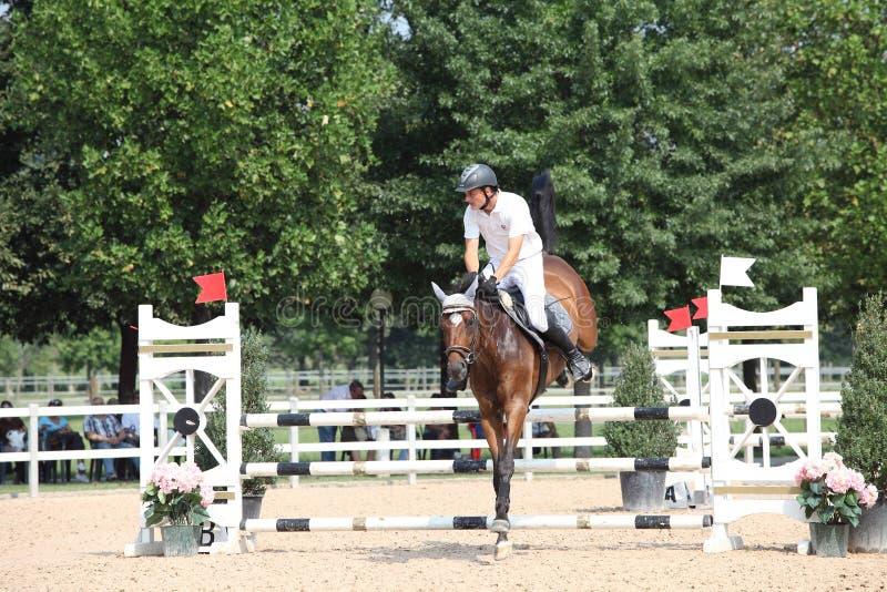 Pferd springen über einen Zaun stockfotografie