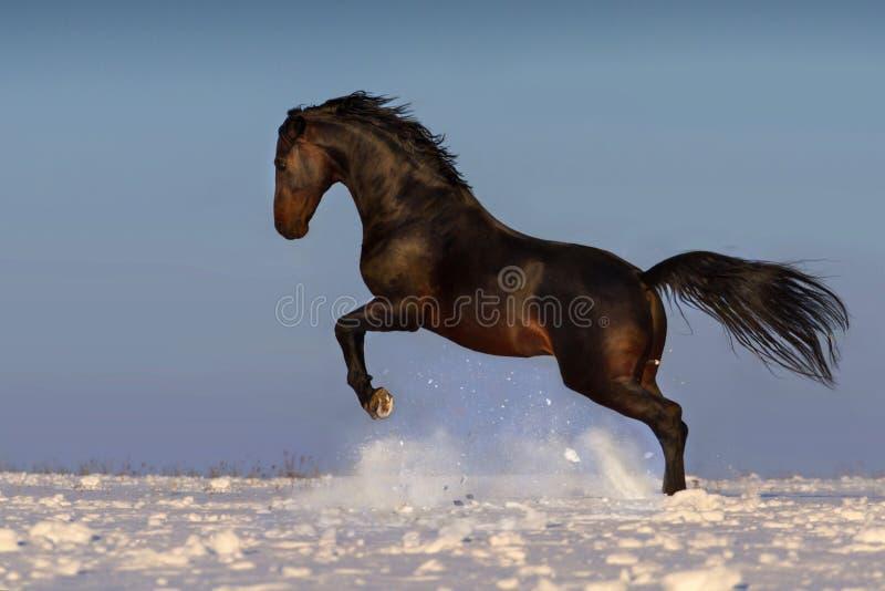 Pferd springen lizenzfreies stockbild