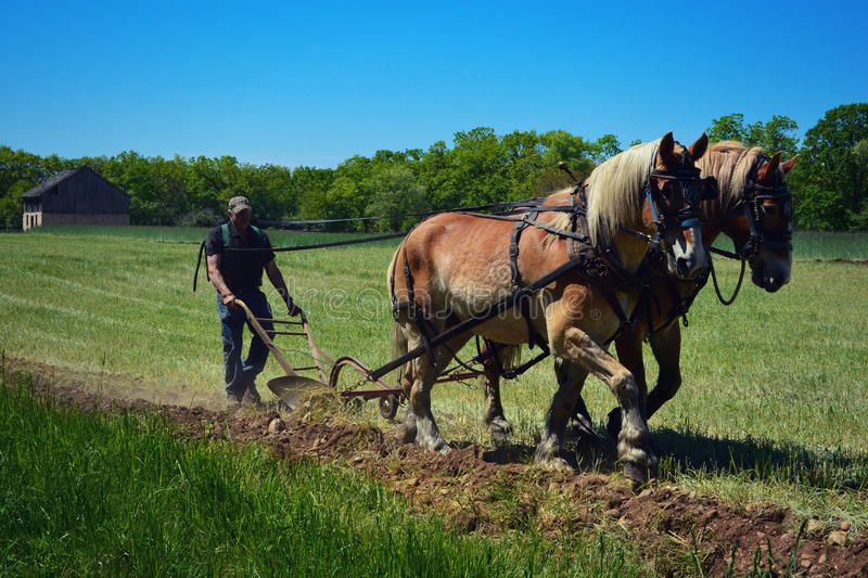 Pferd Team Plowing stockbild