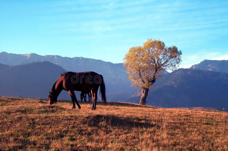 Pferd und Baum lizenzfreie stockfotografie