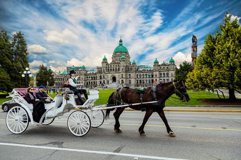 Pferd und Buggy in Victoria stockbild