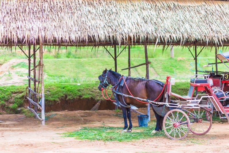 Pferd und ein sch?ner alter Wagen im alten Bauernhof stockfotos
