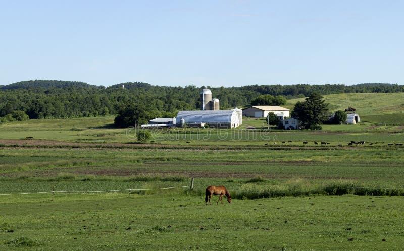 Pferd und Feld lizenzfreie stockfotos