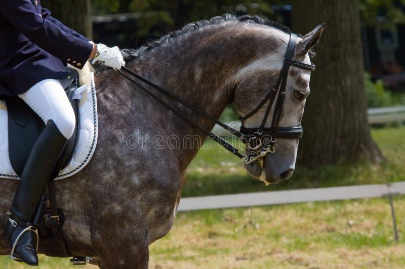 Pferd und Jockey lizenzfreie stockfotos