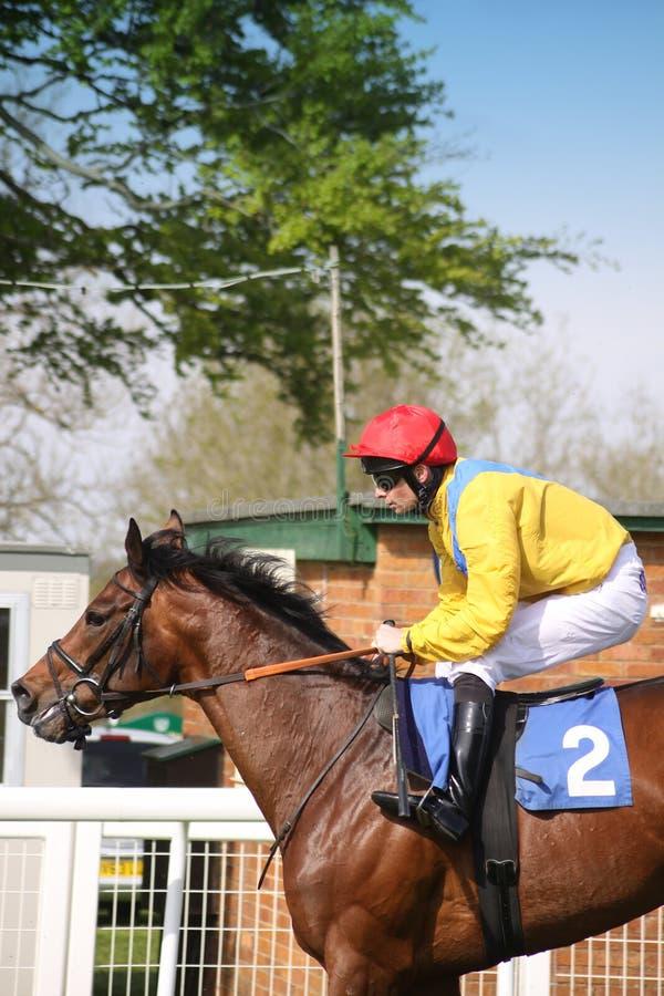 Pferd und Jockey stockfotos