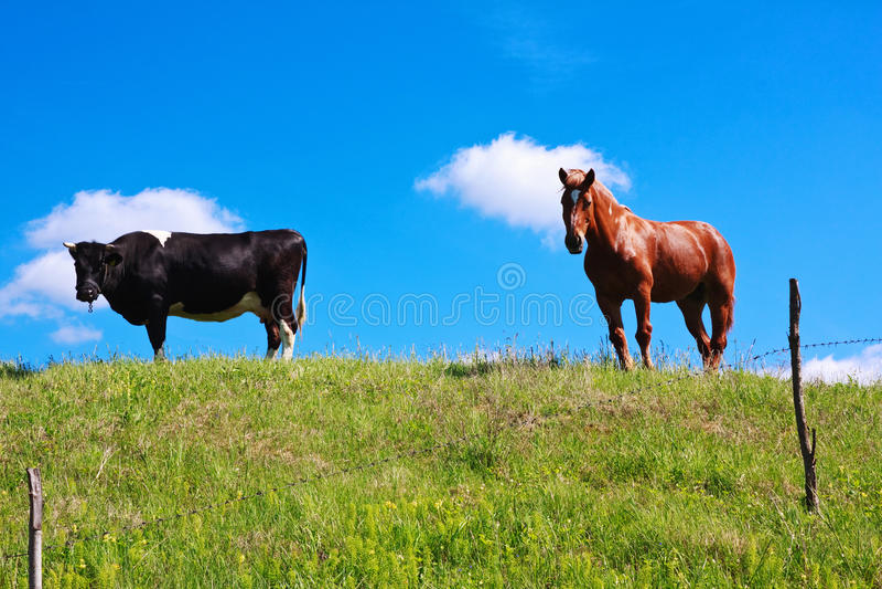Pferd und Kuh lizenzfreies stockbild